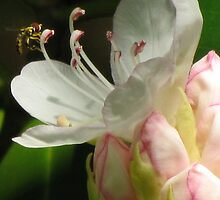 Rhododendron Pollination by Jean Gregory  Evans