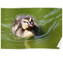 Cute chick Poster