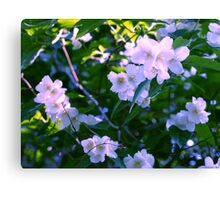 Blossoms 1 Canvas Print