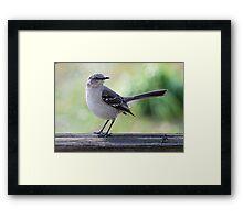 Mockingbird Hill Framed Print