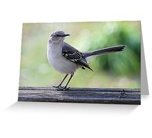 Mockingbird Hill Greeting Card