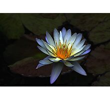 Low Key Waterlily Photographic Print