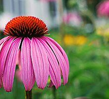 Cone Flower by Alyssa Griggs