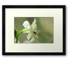 Tranquil Beauty Framed Print