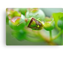 Beetle on the blueberries Canvas Print