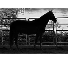 Portland's Mounted Police Unit Photographic Print
