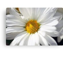 White Petals Canvas Print