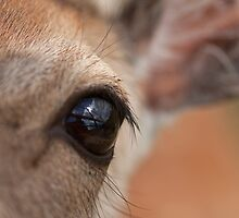 Aye Aye my deer? by Jon Lees