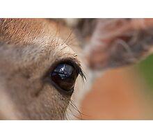 Aye Aye my deer? Photographic Print