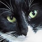 Look into my eyes by Beth Clark-McDonal