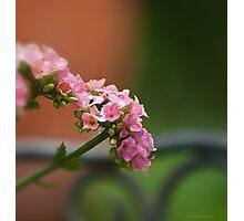 Pink bokeh Photographic Print