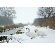 Woodwalton Fen - Snow Swans Photographic Print