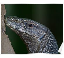 Land Monitor Lizard Poster