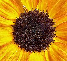 Sunny by Gayle Dolinger