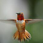 Angel Wings by DJ LeMay