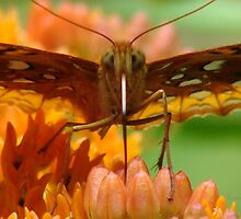 Great Spangled Fritillary Portrait by Jean Gregory  Evans