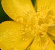 Yellow rain by Éilis  Finnerty Warren