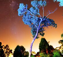 Blue Tree by ea-photos