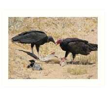New World Vultures ~ Turkey & Black Vulture Art Print
