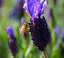 Lavender Bee by Kristina K