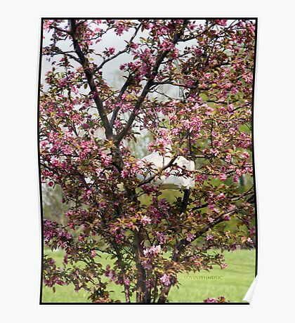 Blossoming Crabapple Poster