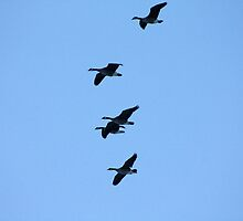 Formation Flight by Alyce Taylor