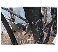 Hiding in the Cottonwoods Poster