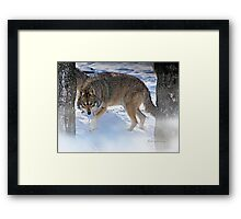 Watchful Coyote Framed Print