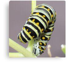 Caterpillar Yoga Canvas Print