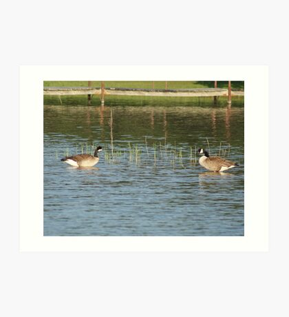 Canadian Geese-in Texas-In May Art Print