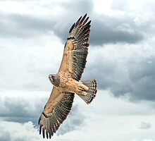 Hawk in The Clouds  by Judy Grant