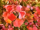 Chinese Tallow tree leaves in Autumn by Albert