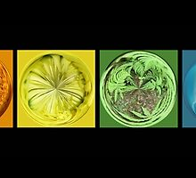 Rainbow Flower Swirls  by Cody  VanDyke