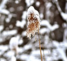 After the snowstorm by Nancy Rohrig