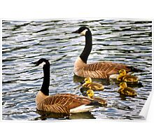 Geese growing up Poster