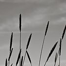 Kurosawa Grass Stalks by Edward Myers