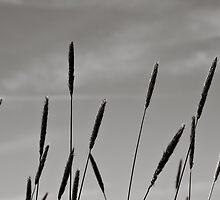 Kurosawa Grass Stalks by Edward Myers