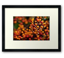 Berry Reflections Framed Print