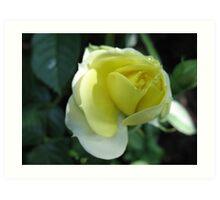 In the Lemon Softness of Petals Art Print