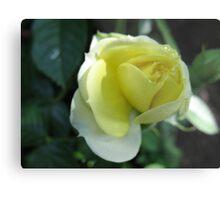 In the Lemon Softness of Petals Metal Print