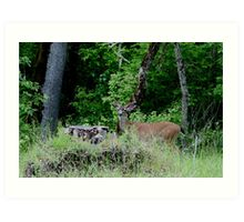 White tail in velvet Art Print