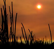 Sunset on Grassy Hill by Virginia Daniels