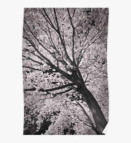 Cotton Candy Tree Poster