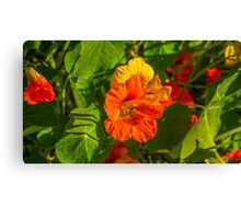 Colourful Springtime Flowers - Bendigo, Victoria Canvas Print