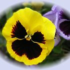 Yellow and Purple Pansies Vignette by BlueMoonRose