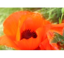 Klatschmohn Photographic Print