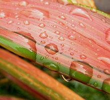 Raindrops on Flax by Jennifer Radcliffe