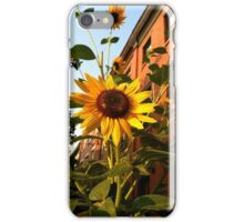 Sunflowers In Bloom iPhone Case/Skin