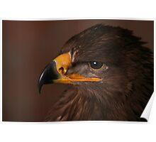 Steppe Eagle Poster