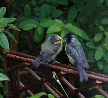 Mom and Baby BlueTit by AnnDixon